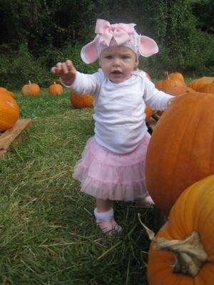 Lambs hiding in the pumpkins!